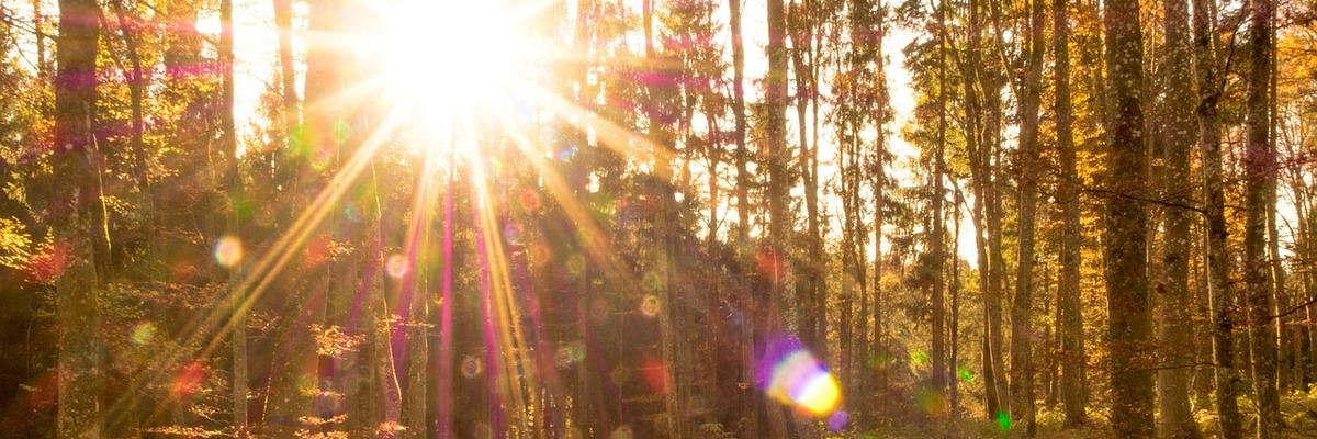 Extra wide autumnforest